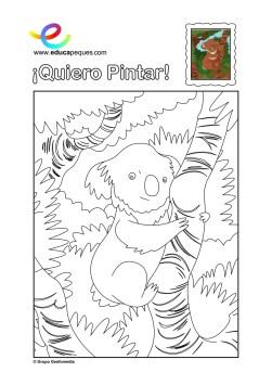 colorear_koala