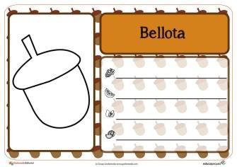 bellota-01