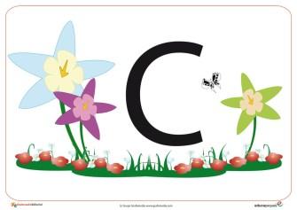 C primavera