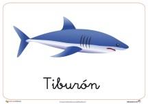 animales marinos 5