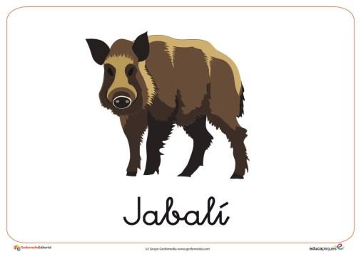 Fichas de Animales Salvajes: Jabalí