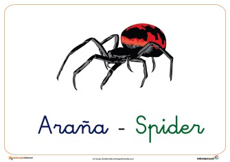 araña ficha insectos
