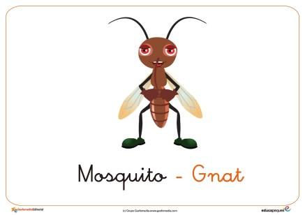 mosquito ficha insectos