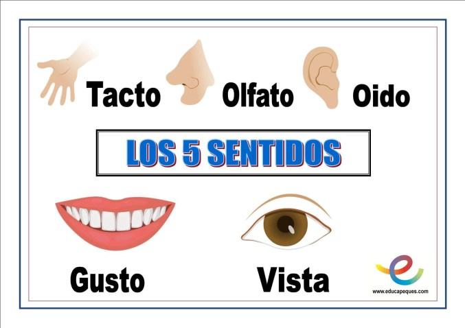 los 5 sentidos, 5 sentidos, los sentidos para niños,los sentidos del cuerpo humano