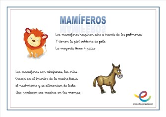 02 Mamiferos