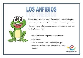 09 Anfibios