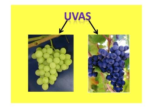 frutos secos y frutas de otoño_022