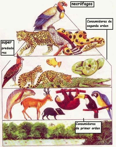 Animales Carnivoros Animales Consumidores De Carne