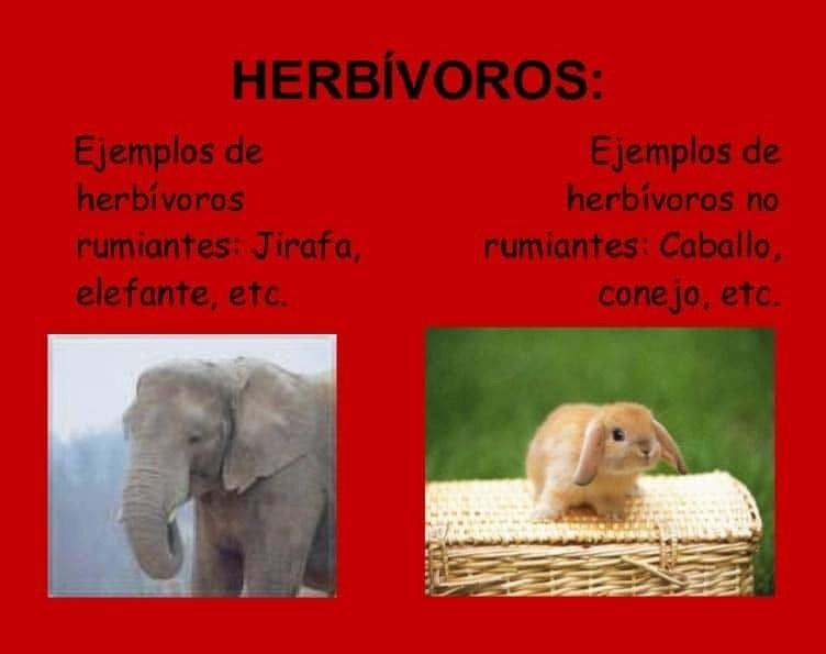 hervívoros
