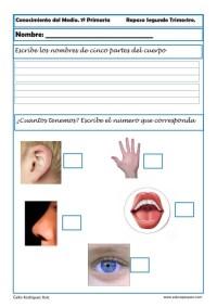 Fichas Conocimiento del medio Primero primaria 2 trimestre 05
