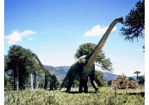 dinosaurios 15