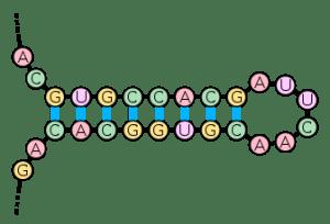 RNA and Conversions