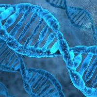 How much of the Human Genome is Functional?