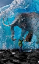 Frozen Mammoth