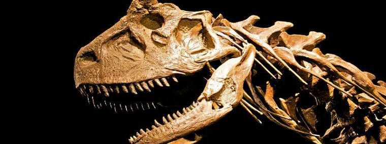 Carbon Dating Cannot Be Used To Determine The Age Of Dinosaur Fossils Because