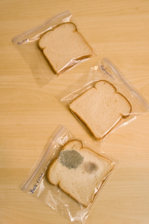 Bread Mold Experiment Activity Education Com