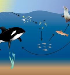 ocean food web science project [ 3750 x 2917 Pixel ]