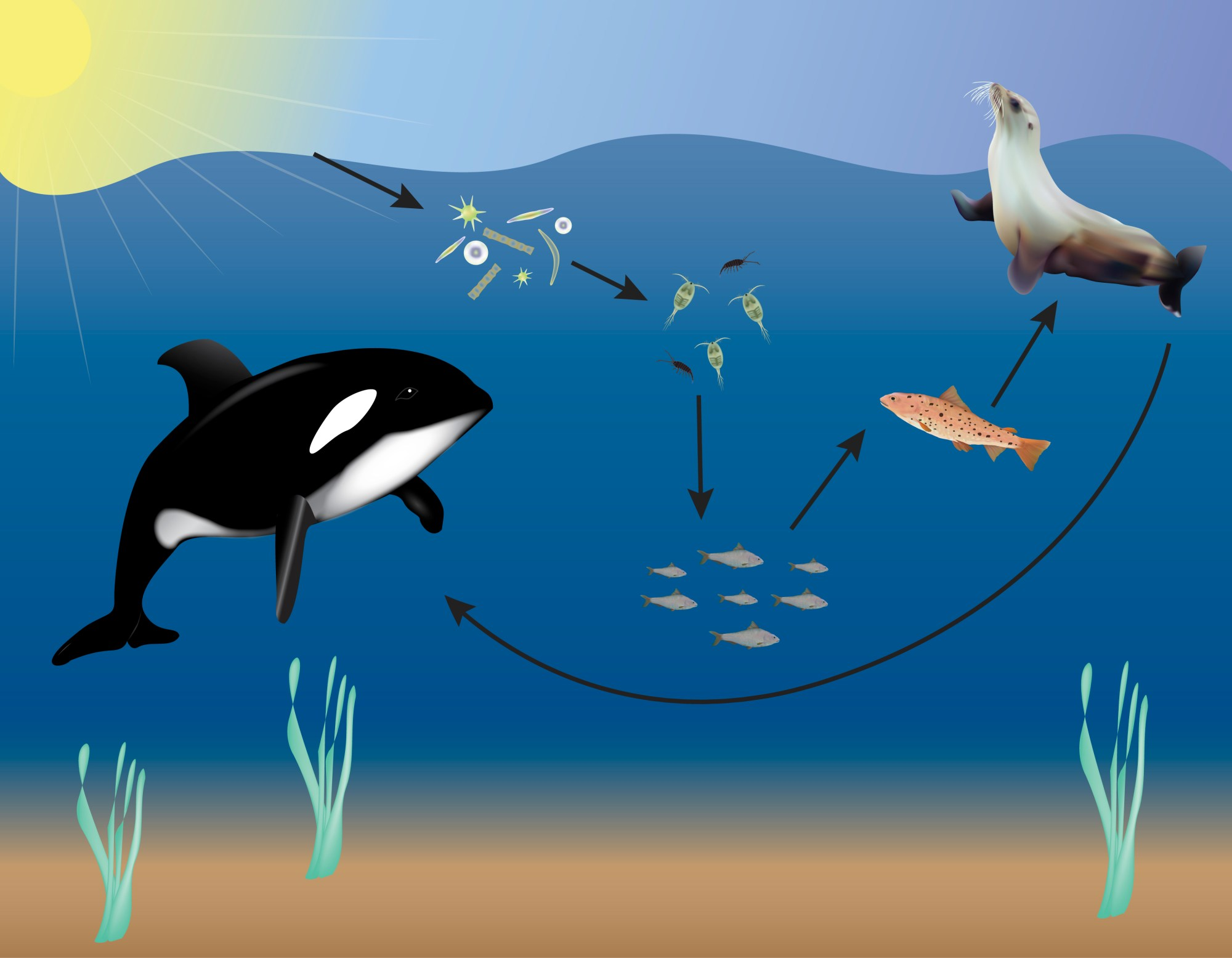 hight resolution of ocean food web science project