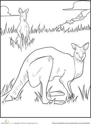 Color The Kangaroo Bucks