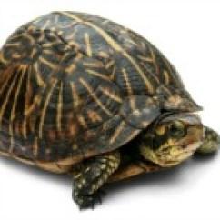 3 Circle Venn Diagram Solver 2005 Ford Escape Firing Order Turtle /t/ Diagrams | Education World