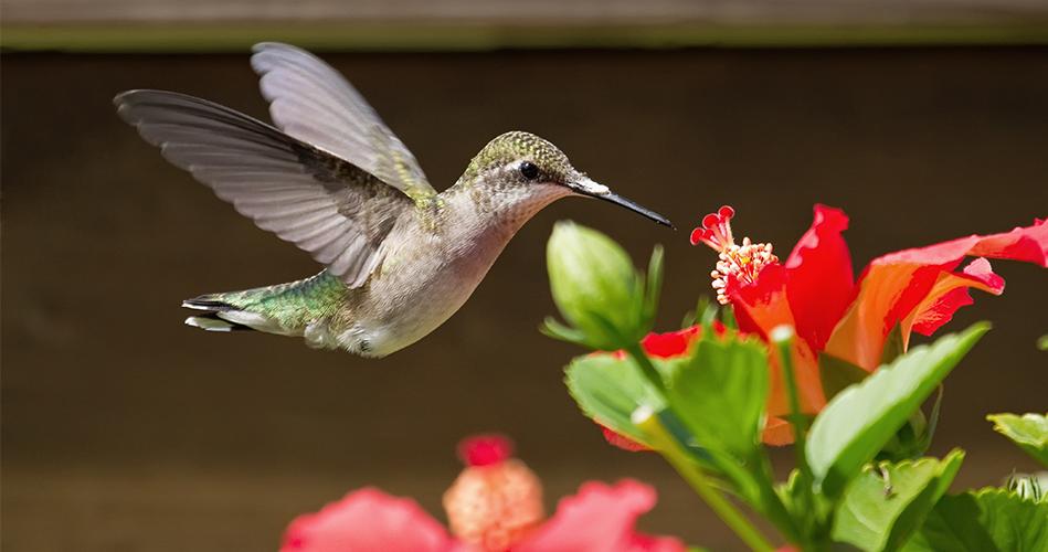Le jardin un refuge pour les oiseaux activits de jardinage pour enfants  Educatout