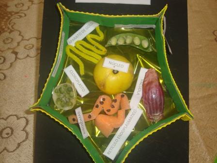 Maqueta De Célula Vegetal Con Material Reciclable Trabajos
