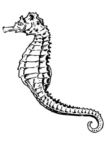 reiwalomy: caballo de mar