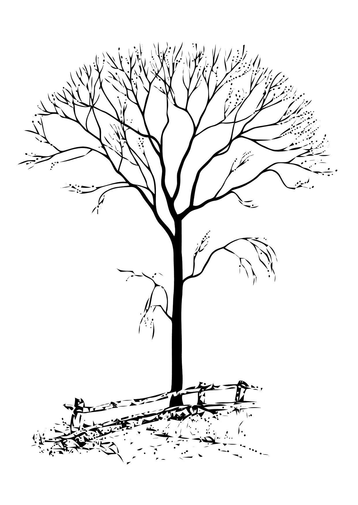 Dibujo para colorear rbol sin hojas  Img 11331