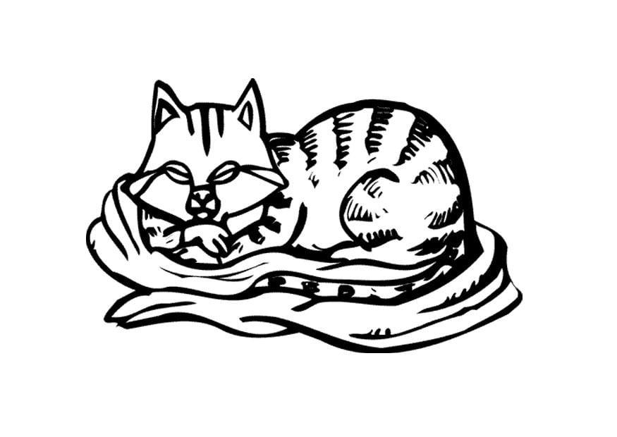 Dibujo Para Colorear Gato Img 11596