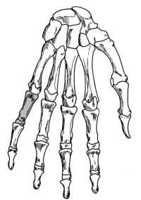 Dibujo De Esqueleto Humano Para Colorear Dibujos De
