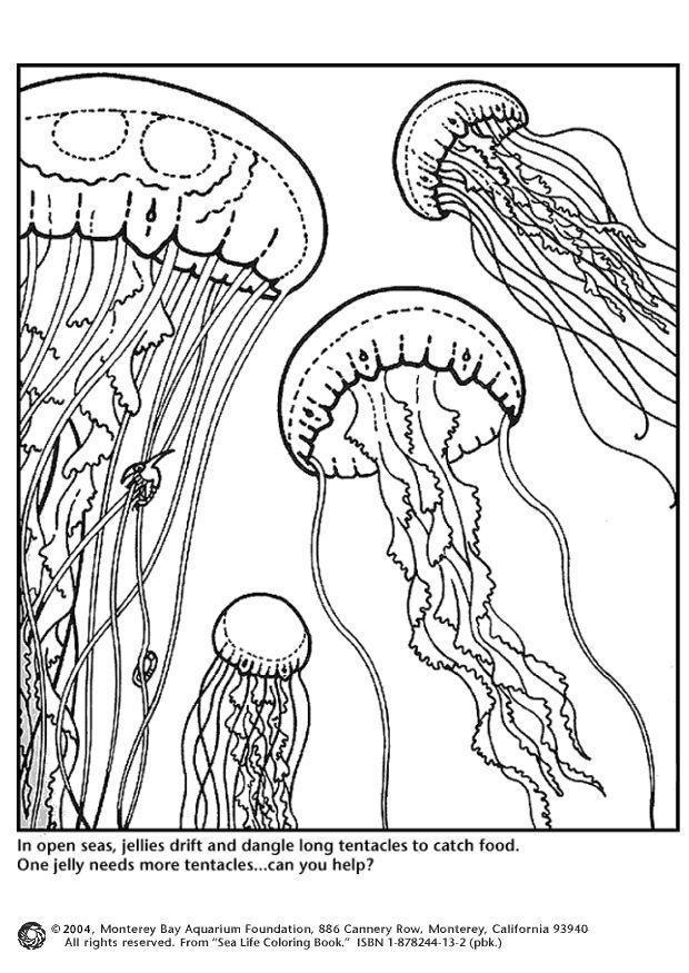Dibujo Para Colorear Medusas Img 4358
