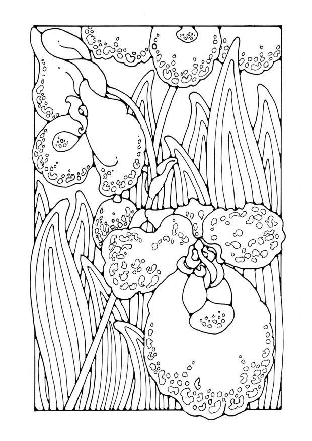 Dibujo Para Colorear Orqudea Img 27752