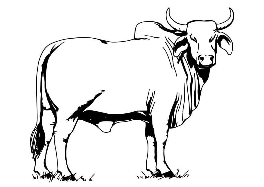 Dibujo De Un Toro Para Colorear