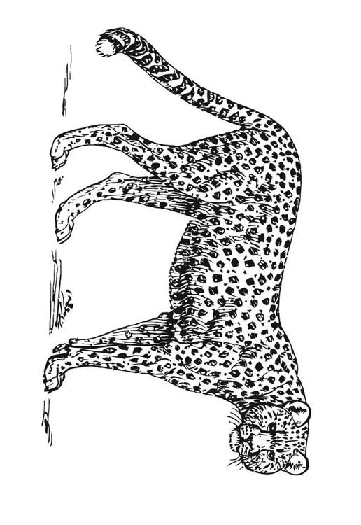 Coloriage Gupard Img 15727