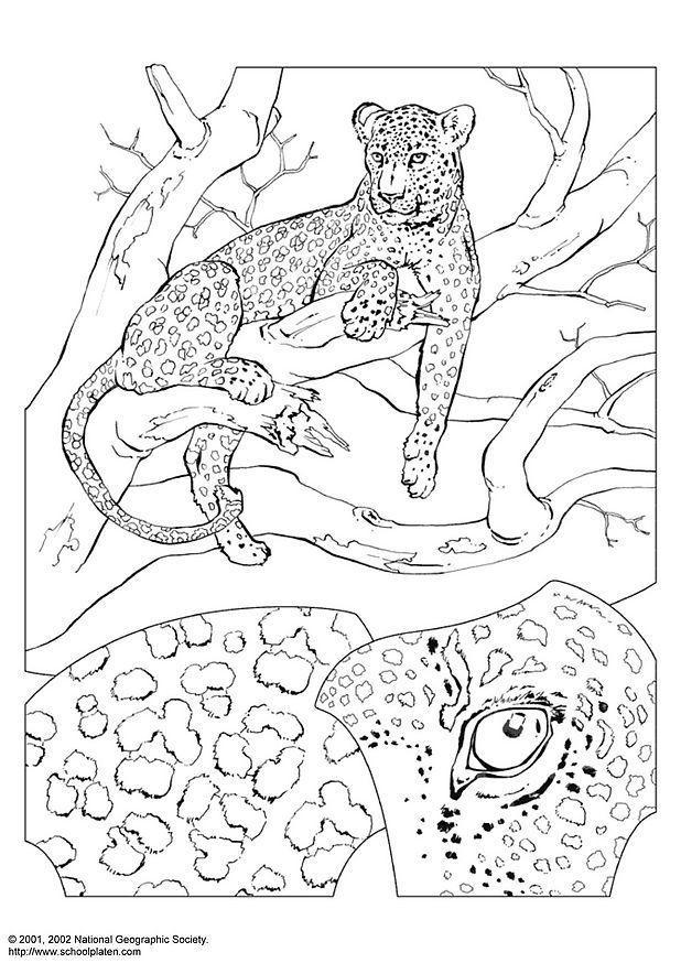 leopard dessin