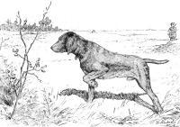 Disegno da colorare cane da caccia - Cat. 9762.
