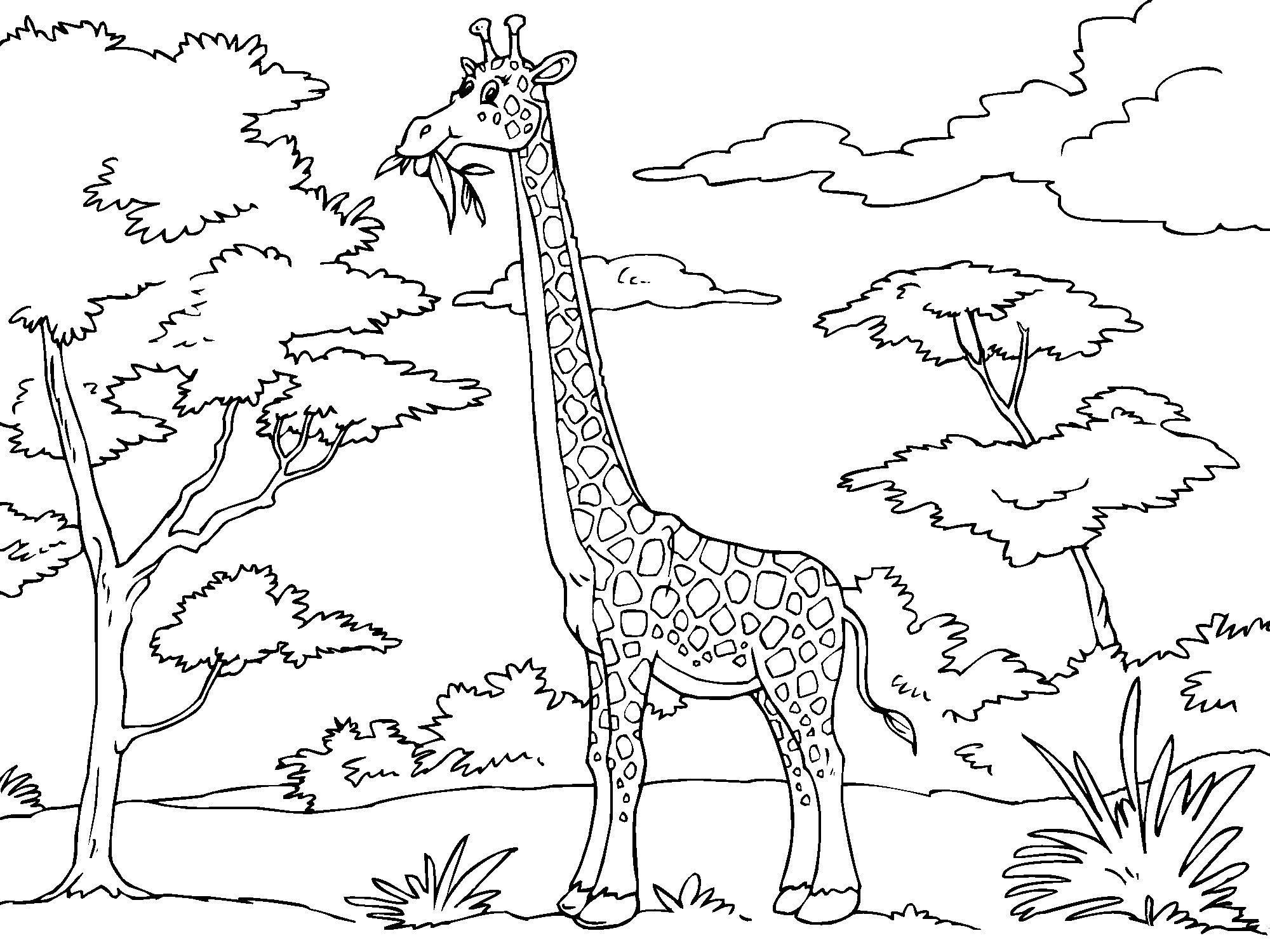 Disegno da colorare giraffa  Cat 23012