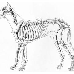 Human Skull Diagram Without Labels Main Panel Wiring Página Para Colorir Esqueleto De Um Cachorro - Img 19660.