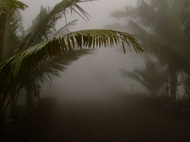 La neblina Chipre, Manizales, Caldas; Colombia
