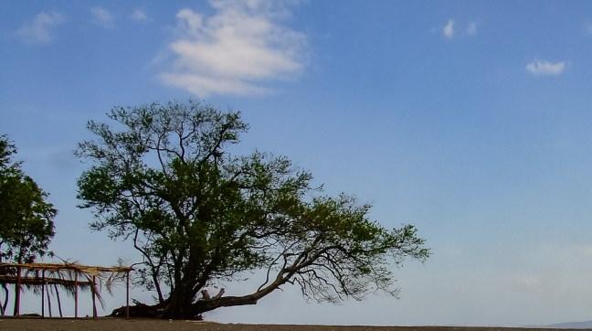 Llanero solitario Playas de Ometepe, Rivas, Nicaragua