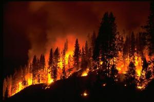 wildfirel