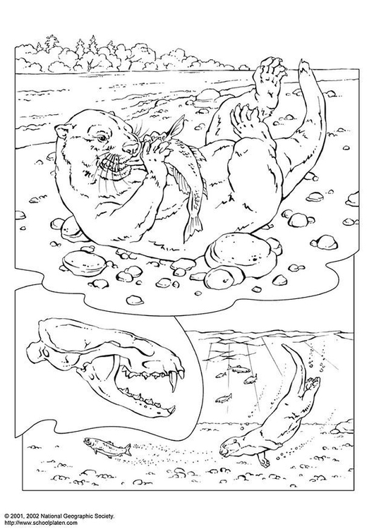 Coloring Page Otter Free Printable Coloring Pages