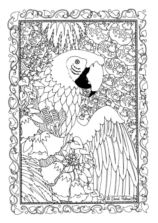 Coloring Page Parrot Free Printable Coloring Pages