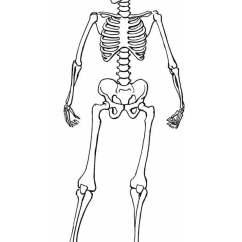 Bones Skeleton Diagram With Labels Single Phase Motor Reversing Wiring Coloring Page - Img 8910.