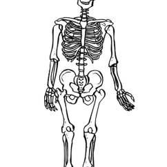 Kids Skeletal System Diagram Chrysler Infinity Amp Wiring Coloring Page Skeleton - Img 9490.