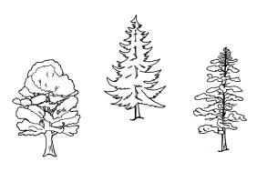 Coloring Page trees   free printable coloring pages   Img 9640