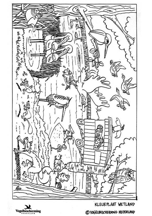 Coloring Page Wetland Img 8871