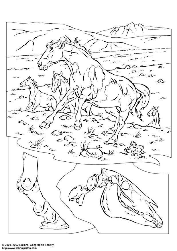 y878naly: horses and ponies coloring pages