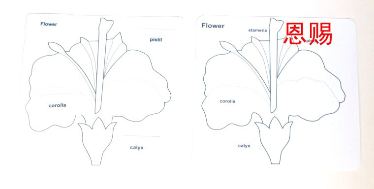 leaf tree and flower puzzle control chart PP montessori