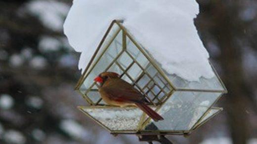 Squirrel Baffling Window Bird Feeder Giveaway